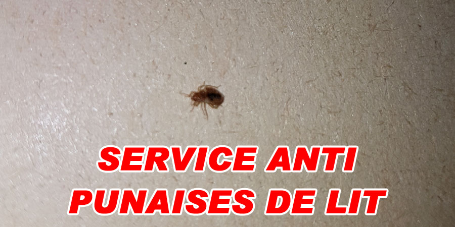 services anti punaises